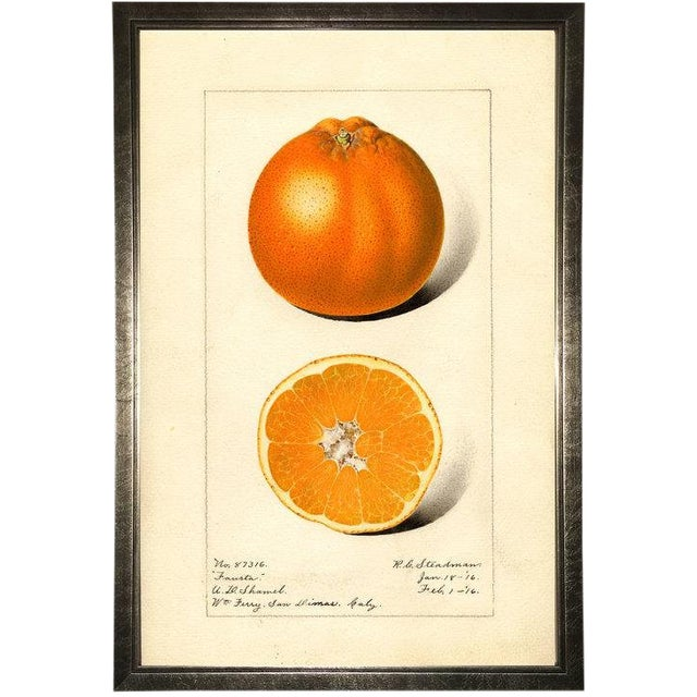 Orange Study in Pewter Shadowbox 17x25 For Sale