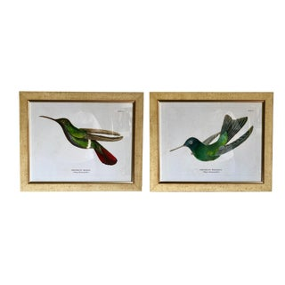 Framed Antique Hummingbird Prints- Sets For Sale