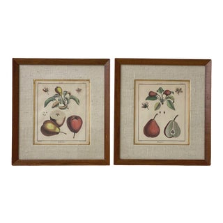 """Antique """"Traite Des Arbres Fruitiers"""" Hand-Colored Engravings, Circa Early 19th Century For Sale"""