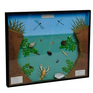 A Great Vintage School Teaching Display Of The Fresh Water Habitat For Sale