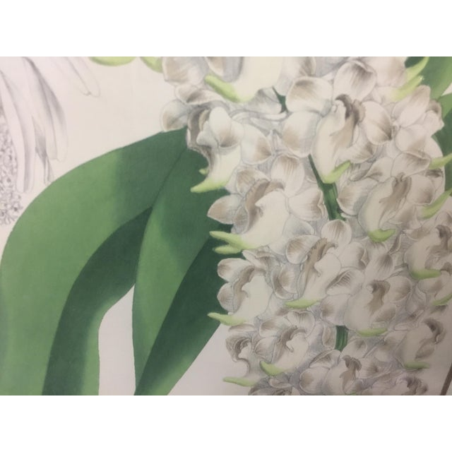 Botanical Print of Christmas Orchids For Sale - Image 4 of 7