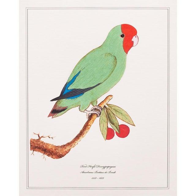 Tan 1590s Anselmus Boëtius De Boodt, Parrot Print Set of 9 For Sale - Image 8 of 13