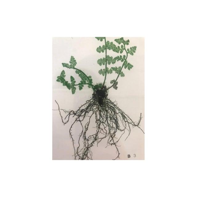 Late 19th Century 19th Century Bradbury & Evans Nature Printed Fern Print For Sale - Image 5 of 6