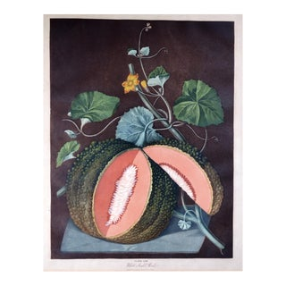 George Brookshaw Engraving of a Melon, Plate Lxv, White Seeded Rock, From 'Pomona Britannica, Or, a Collection of the Most Esteemed Fruits' For Sale