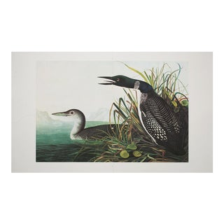 1960s Cottage Style Lithograph of Great Northern Diver by John James Audubon