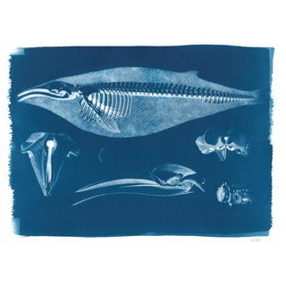 Handmade Whale Skeleton Cyanotype Print on Watercolor Paper, Limited Edition For Sale