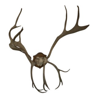 19th Century Mounted Antlers For Sale