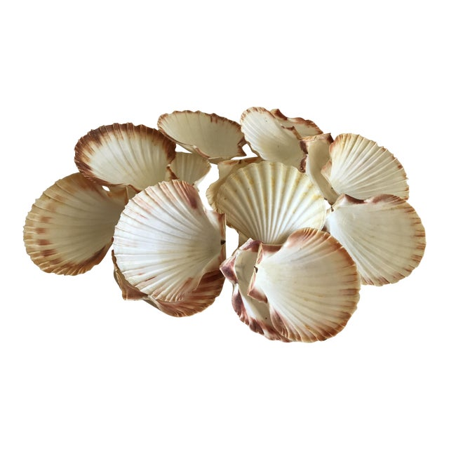 Natural Sea Shells - Set of 15 - Image 1 of 11