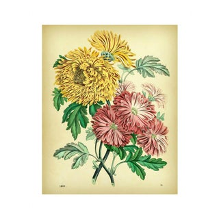 Antique 'Mum Bouquet' Archival Print