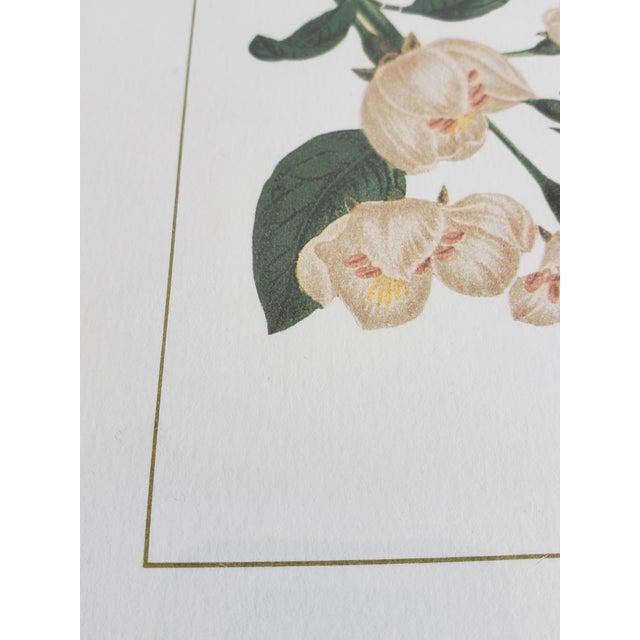 Decorative Butterfly Botanical Framed Prints-Set of 3 For Sale - Image 11 of 12