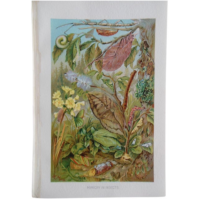 Antique Botanical Creature Lithograph - Image 1 of 3