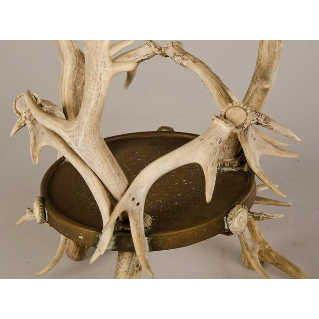 Circular Display Platform Enclosed with Hand Assembled Shed Antler Horn from Scotland c.1875 - Image 8 of 9