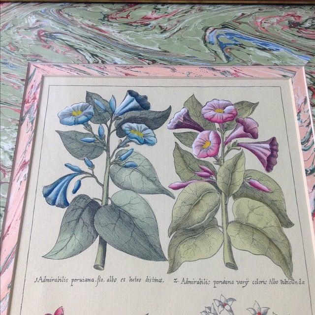 Vintage John Richard Botanical Print - Image 3 of 11