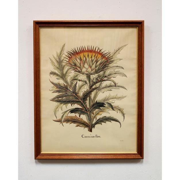 """Cinera Cum Flore"" Hand-Tinted Botanical Print - Image 2 of 8"