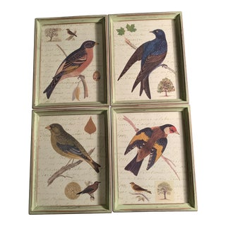 Late 20th Century Bird Reproduction Prints, Framed - Set of 4 For Sale