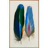 "Image of ""Two Scarlet Macaw Feathers"" by Mary Jo McConnell (B.1935-) Mixed Media in Custom Oak Frame!~ For Sale"