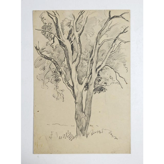Pencil study of a tree by George Baer (American 1895-1971). Unframed. Age toning.