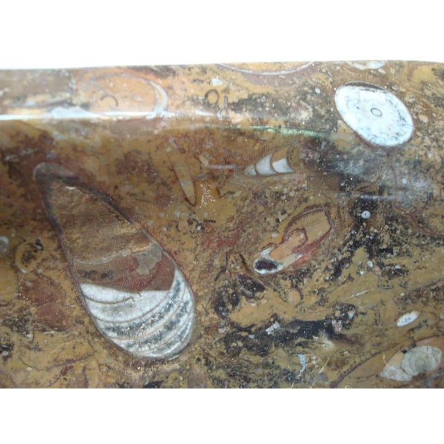 Huge Ammonite and Orthocerus Fossil Dish - Image 7 of 7