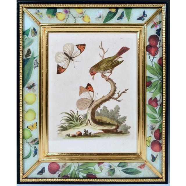 C. 1740 George Edwards Engravings of Birds - Set of 12 For Sale In Philadelphia - Image 6 of 12