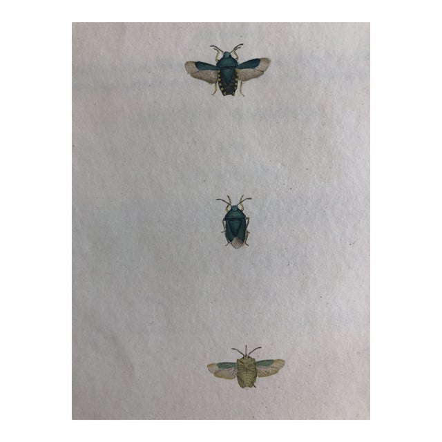 Entomology 19th Century Insect Print For Sale