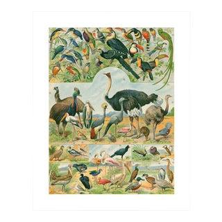 Antique 'Ostrich & Friends' Archival Print For Sale
