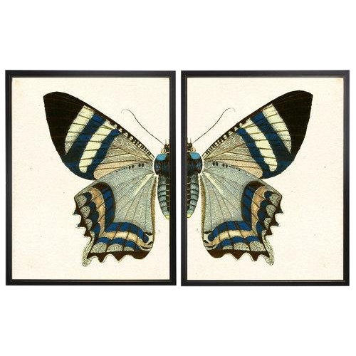"""Split Blue and White Butterfly - 38"""" X 25"""" For Sale"""