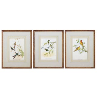 Set of Three Colored Ornithological Prints After Gould For Sale