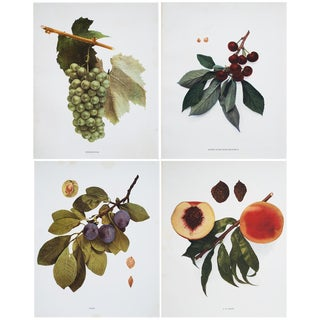 U.P. Hedrick Fruits of New York Large Photogravures- Set of 4