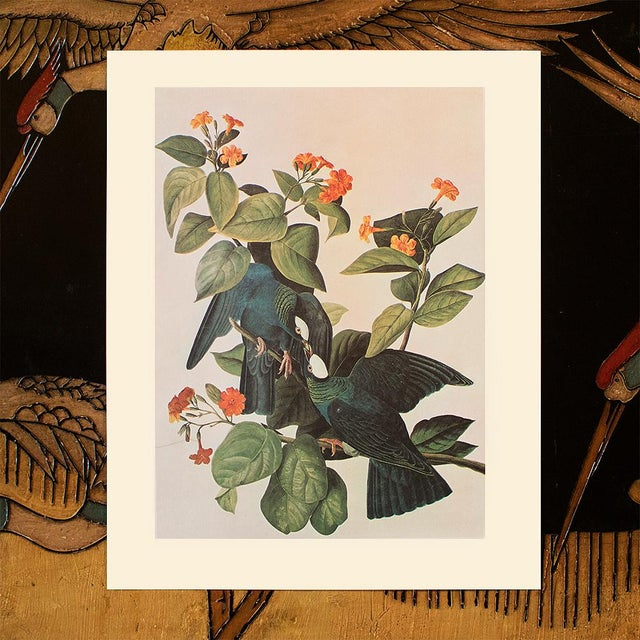 1960s White-Crowned Pigeon by John J. Audubon, Vintage Cottage Print For Sale - Image 5 of 8