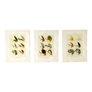 Vintage 1955 Bass Fly Fishing Prints - Set of 3 For Sale