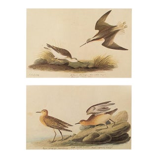1966 Wilson's Phalarope & Buff-Breasted Sandpiper by Audubon For Sale