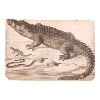 Vintage School Graphic Crocodile Chart For Sale