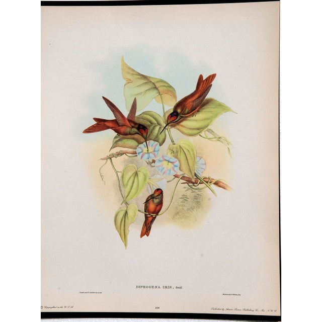 1940s John Gould Hummingbird Lithographs - Set of 6 (Marked Down to $35 Until September 15th) - Image 7 of 11