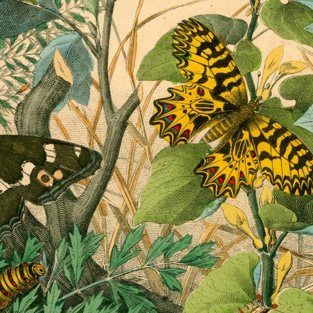 Antique 'Butterfly Garden' Archival Print For Sale - Image 4 of 4