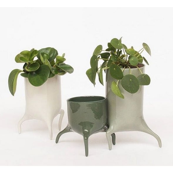 The Carnivora are small porcelain planters that seem to run off with their plants. They are carefully finished by hand and...