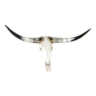 Vintage Longhorn Cowl Skull For Sale