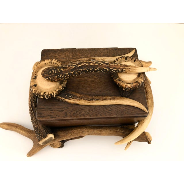 Black Forest Wood Box With Natural Antlers For Sale - Image 13 of 13