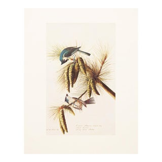 1966 Cottage Lithograph of Tufted Titmouse by Audubon For Sale