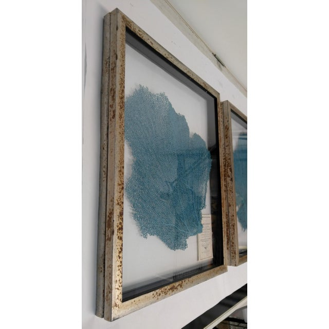 English Blue Haze Sea Fan in Antiqued Silver Frame For Sale - Image 3 of 10