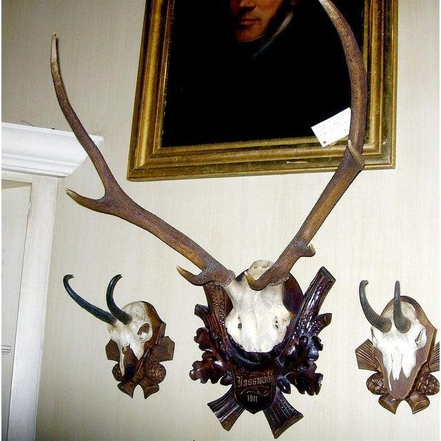 Early deer antler mount on black forest carved wood plaque.