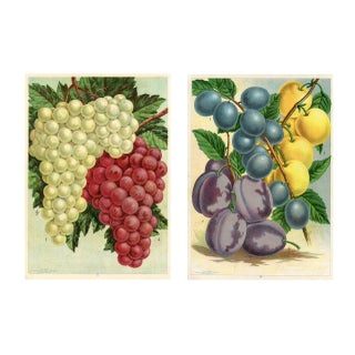 Grape & Plum Prints - a Pair For Sale