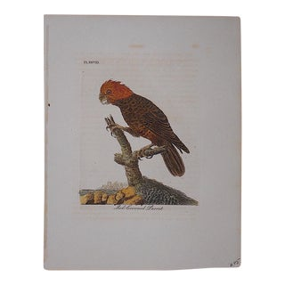 Antique 18th-Century Bird Engraving For Sale