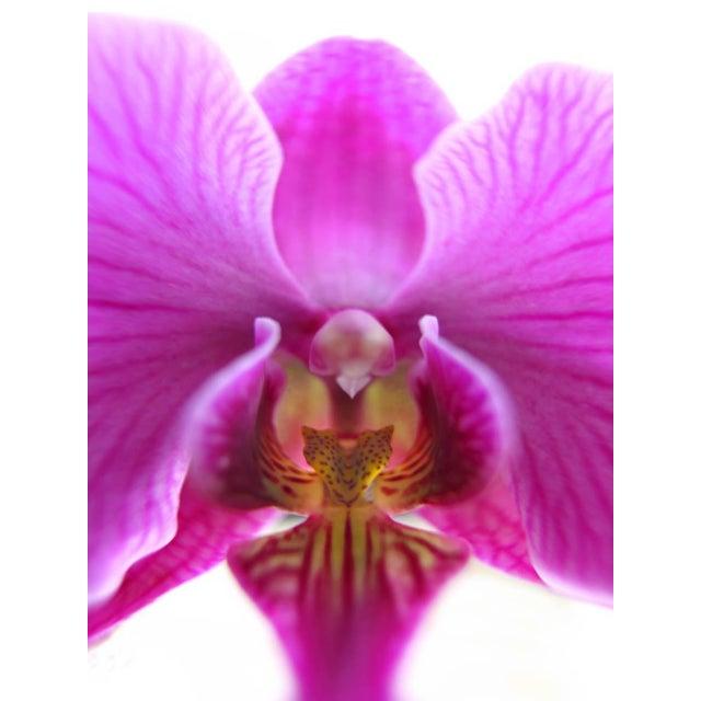 Botanical Photograph printed on Fine Art Paper