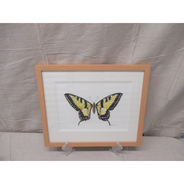 Western Tiger Swallowtail Butterfly Watercolor by Mary Ann Ho For Sale - Image 4 of 8