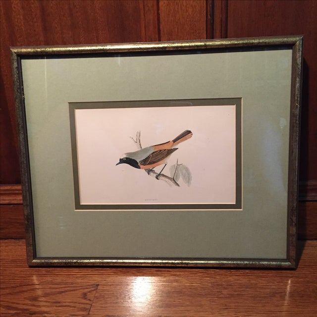 18th C. English Bird Prints in Matching Frames - Image 7 of 12