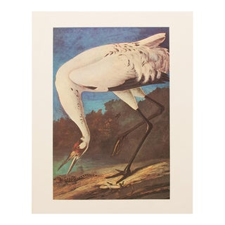1960s Vintage Audubon Whooping Crane Lithograph Print For Sale