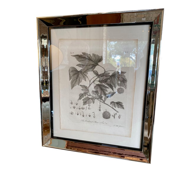 A set of six antique botanical prints in chrome frames.