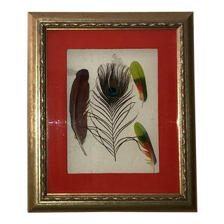 Modern Contemporary Pressed Peacock Bird Feather Floating Framed Art For Sale