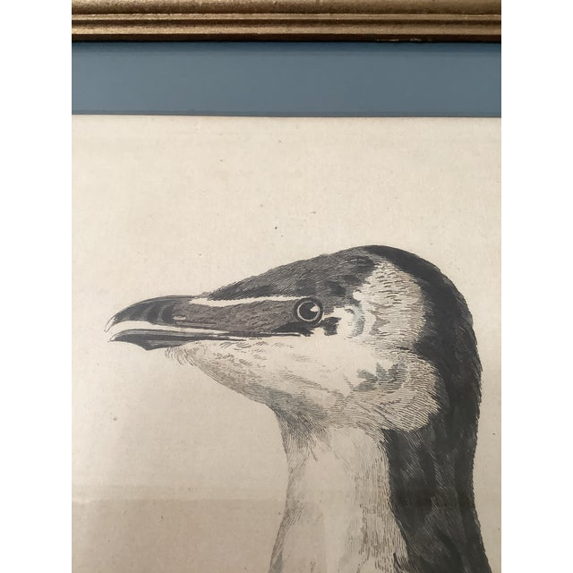 18th Century 18th Century Antique Original Peter Mozell Engraving by T Pennant For Sale - Image 5 of 11