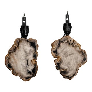 Pair Sconces with Petrified and Polished Wood